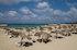 Lebanese Beach Scene